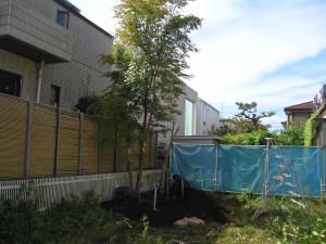 大木(ヒメシャラ)の移植 世田谷区D様邸