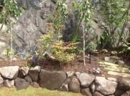ナツハゼ 落葉低木