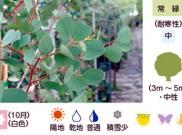 マウンテンスランプガム 暮らしに役立つ植物たち②