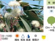 フォレストレッドガム 暮らしに役立つ植物たち③