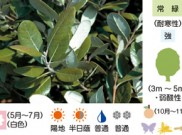 フェイジョア 暮らしに役立つ植物たち⑦