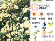 つる性植物のご紹介①