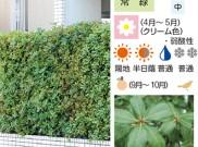 生垣植栽 お勧めプランツ③